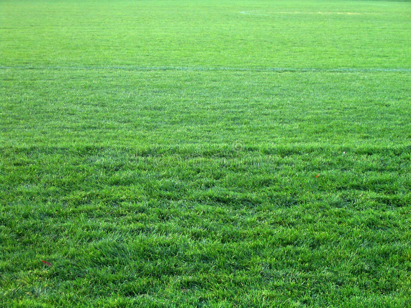 Alles grüne Gras stockfotografie