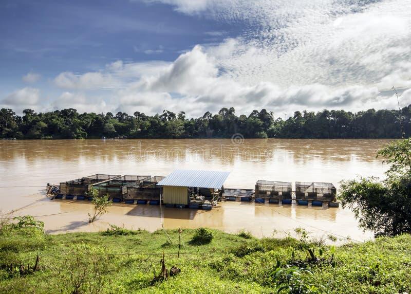 Allevamento della gabbia del pesce di Patin ad un fiume fotografia stock libera da diritti