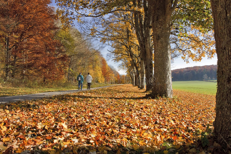 Download Alley In Autumn Royalty Free Stock Photos - Image: 26573828