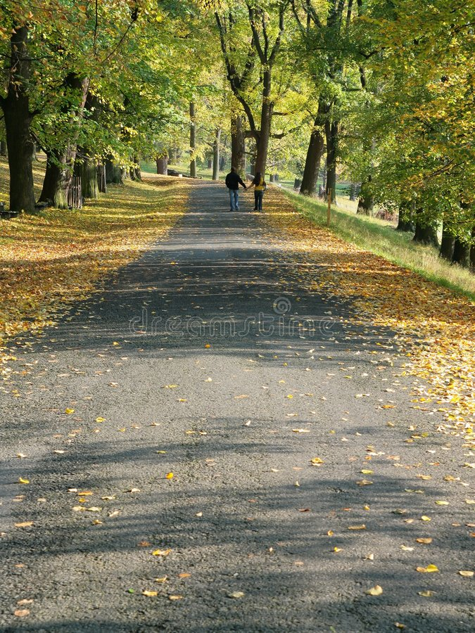 Download Alley on autumn stock photo. Image of grass, nature, golden - 6776234