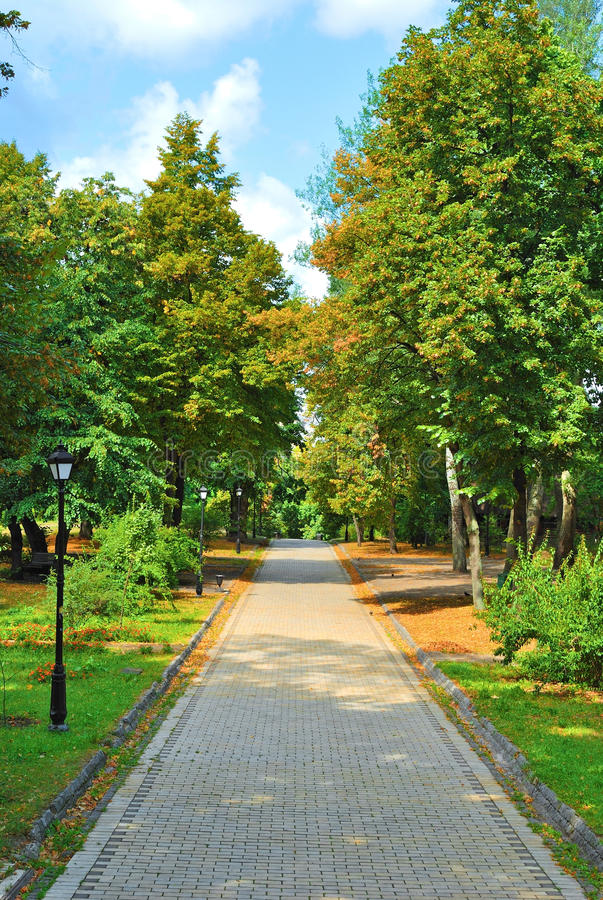 Download Alley in autumn park stock image. Image of morning, pathway - 15722973