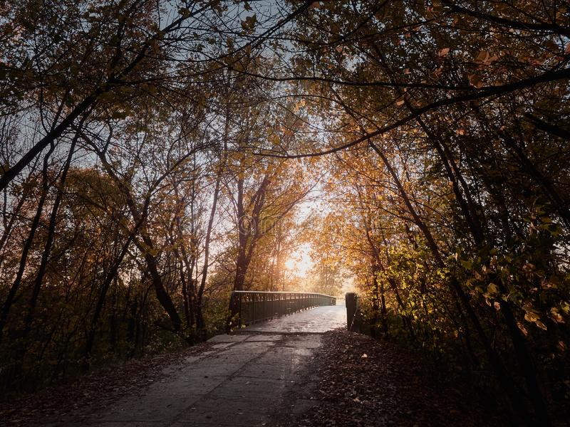 The alley in the autumn park. Beautiful romantic alley in the autumn park with colorful trees and sunlight stock photo