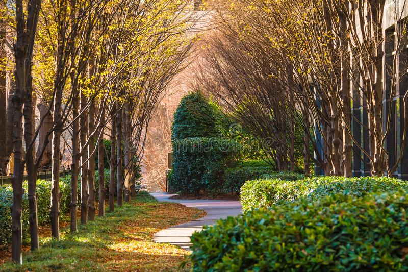 Alley with autumn trees in sunny day, Atlanta, USA. View of the alley with bare trees, bushes and dry leaves lying on the ground in sunny autumn day, Atlanta stock images