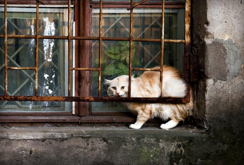 Alley Cat. Street Cat on the windowsill stock photography