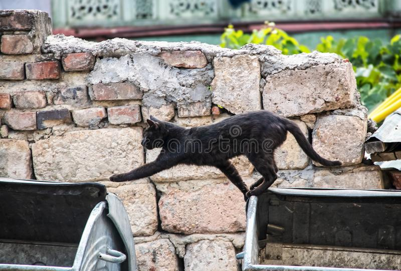 Alley Cat - Black cat gracefully steps over gap between two trash cans in front of rough rock wall.  royalty free stock photo