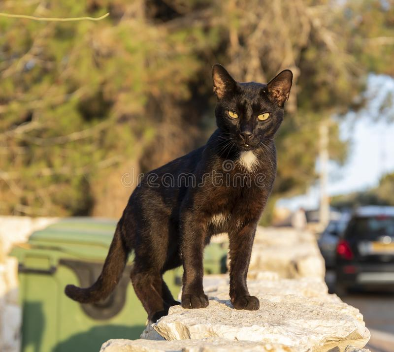 An Alley Cat royalty free stock photography