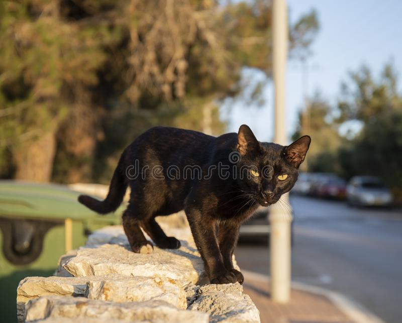 An Alley Cat. A black alley cat on a fence on a sunny day stock photos