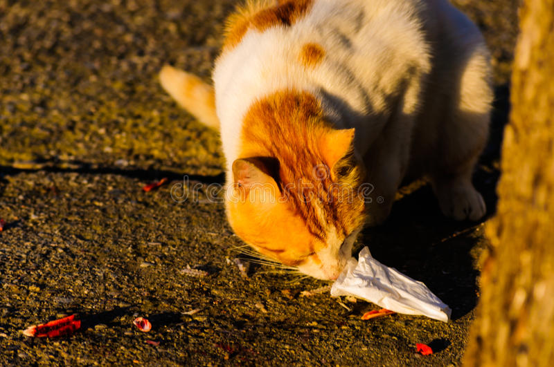 Alley Cat Eating royalty free stock images