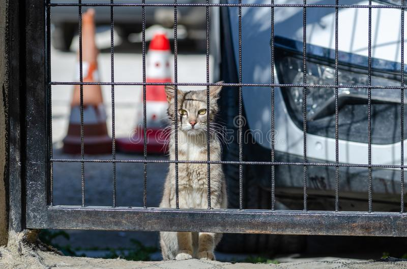 An alley cat in Eskisehir ,Turkey. An alley cat`s funny pose looking at the camera in a garden, outdoor stock image