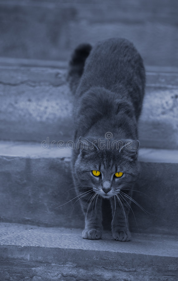 Download Alley Cat With Hypnotizing Eyes Stock Photo - Image: 9165648
