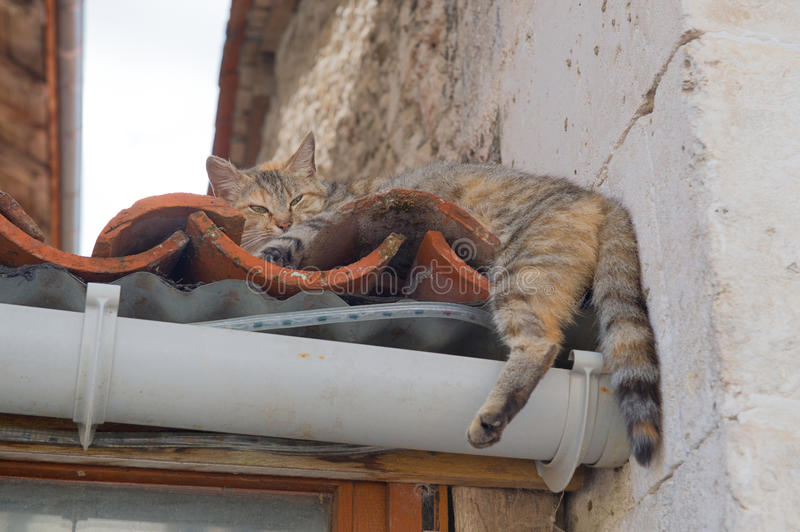 Alley cat. Laying at the roof royalty free stock image