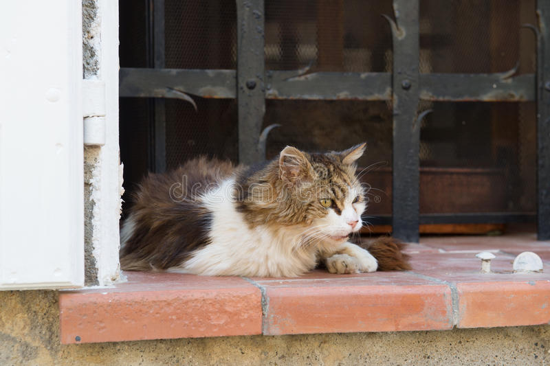 Alley cat. Old alley cat in window in France royalty free stock image