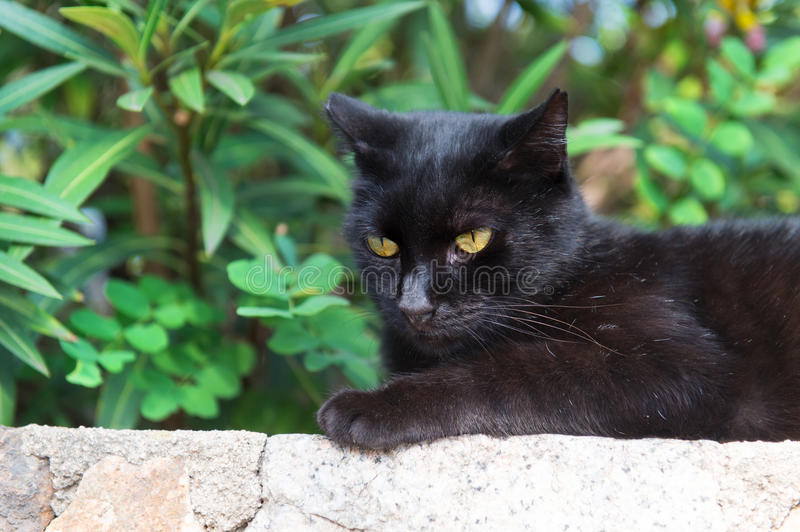 Alley cat outdoor. Black alley cat on wall outdoor royalty free stock photo