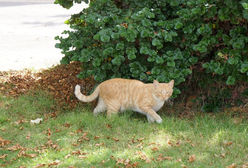 Alley cat in the park royalty free stock images