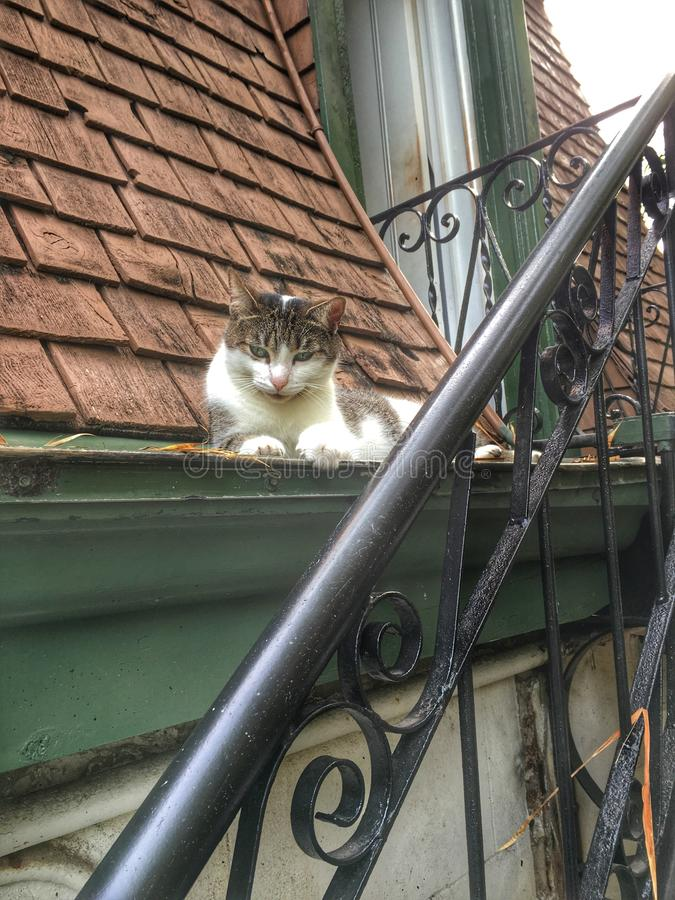 Alley Cat. An alley cat relaxes on the roof of a Florida royalty free stock photos