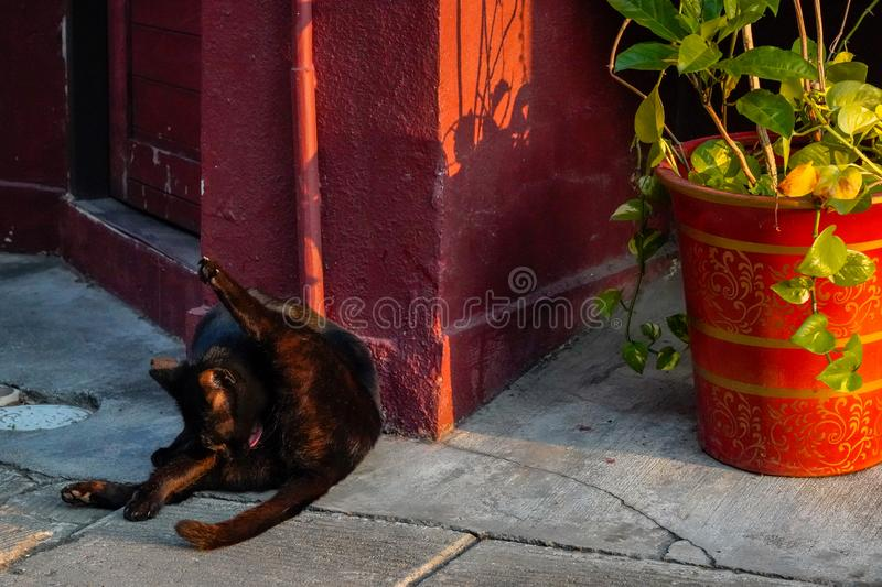 Alley cat relaxing at a doorway on the street. Alley cute cat relaxing at a doorway on the street royalty free stock image