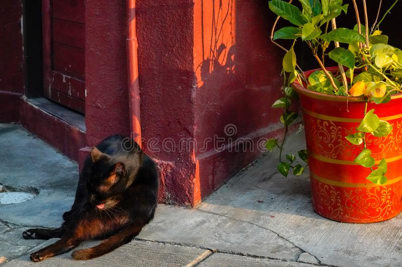 Alley cat relaxing at a doorway on the street. Alley cute cat relaxing at a doorway on the street stock images