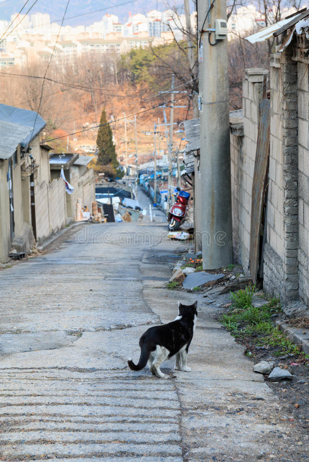 alley cat in shantytown royalty free stock photography