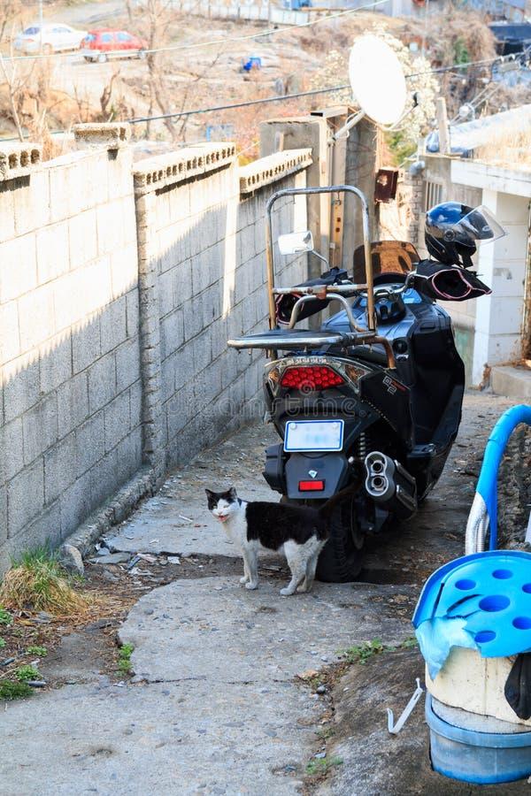 Alley cat in shantytown. In Seoul, Korea stock photos