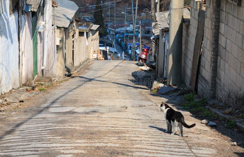 Alley cat in shantytown. In Seoul, Korea royalty free stock photos
