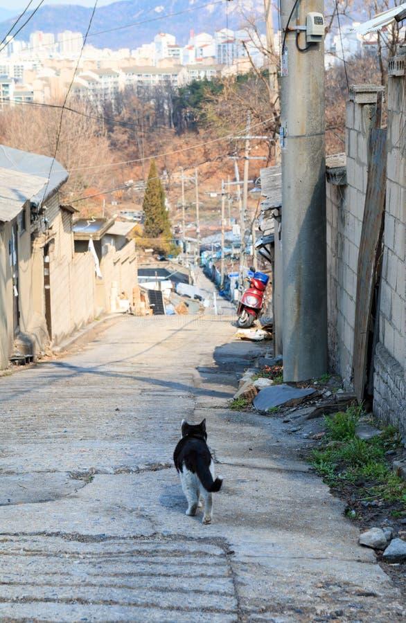Alley cat in shantytown. In Seoul, Korea stock photography