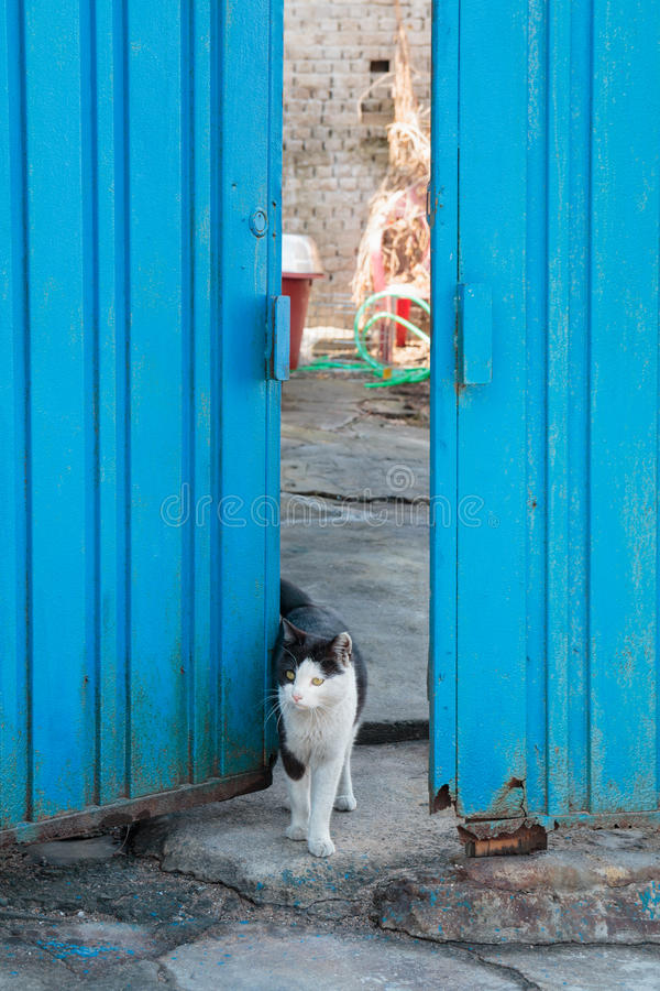Alley cat in shantytown. In Seoul, Korea royalty free stock photography