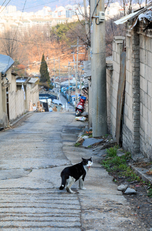 Alley cat in shantytown. In Seoul, Korea stock image