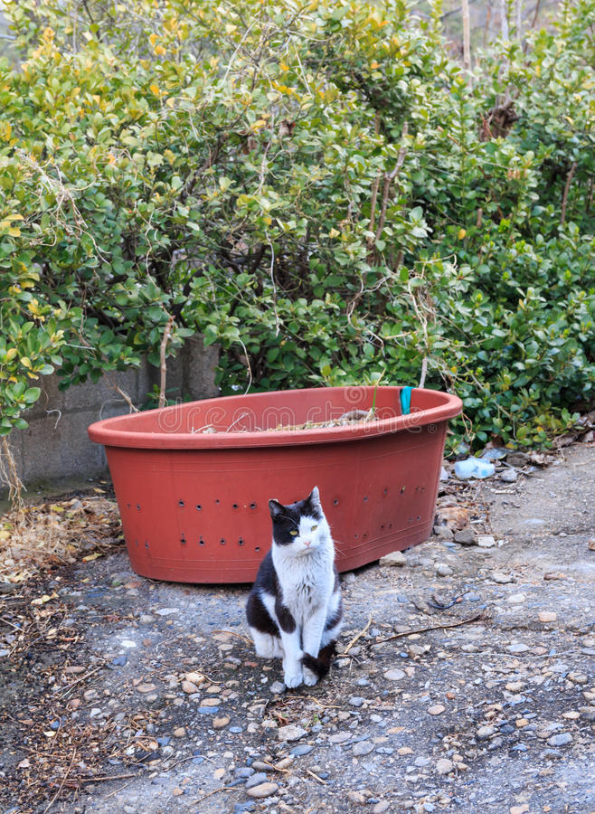 Alley cat in shantytown. In Seoul, Korea royalty free stock image