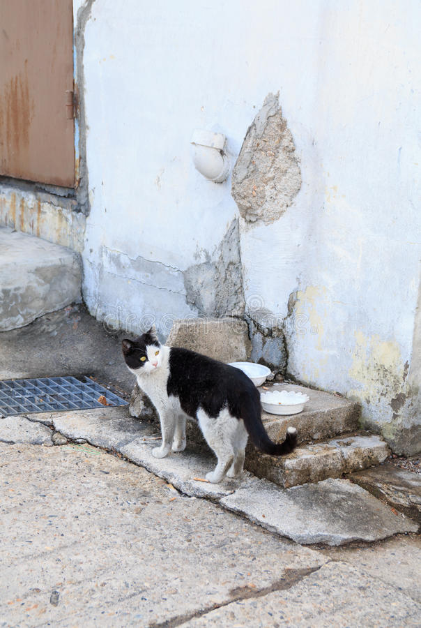 alley cat in shantytown royalty free stock images