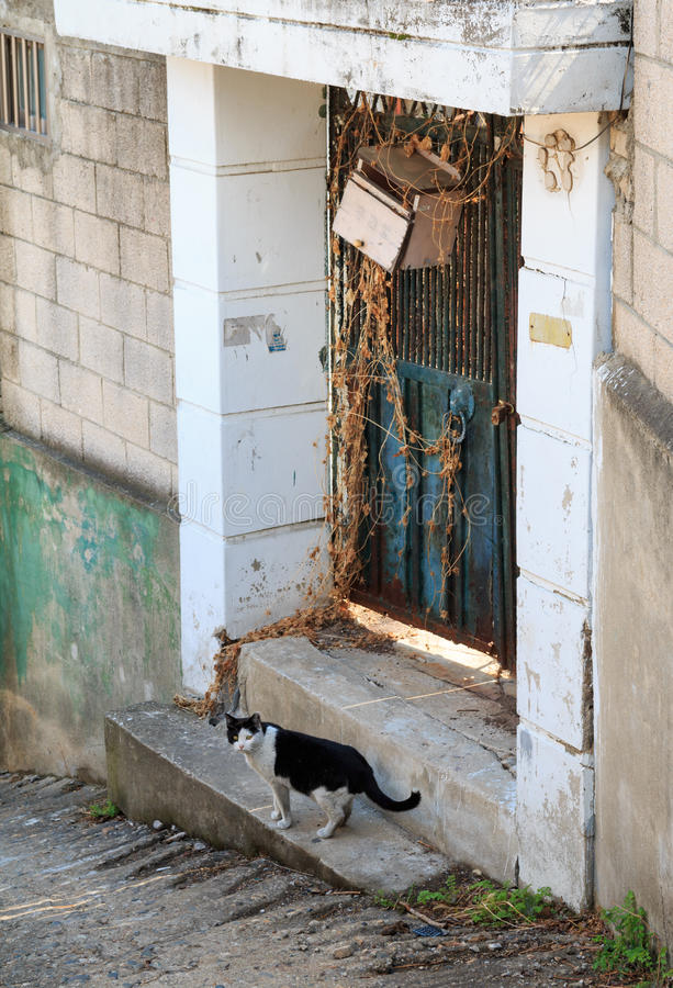 alley cat in shantytown stock photo