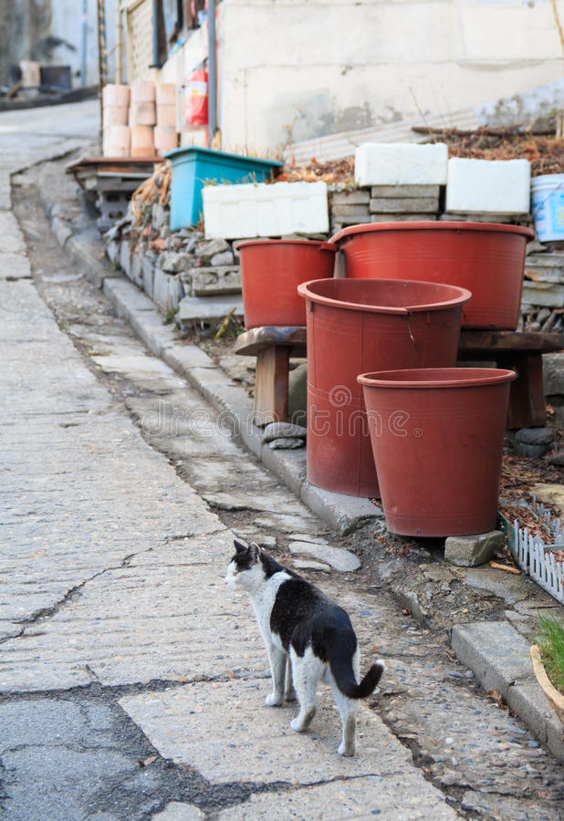 alley cat in shantytown stock photography