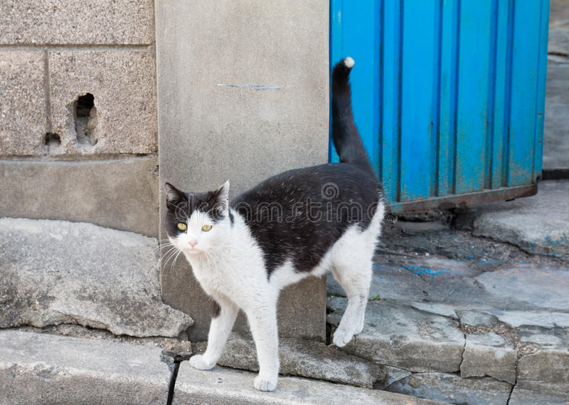 Alley cat in shantytown. In Seoul, Korea royalty free stock images