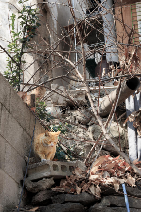 alley cat in shantytown stock image