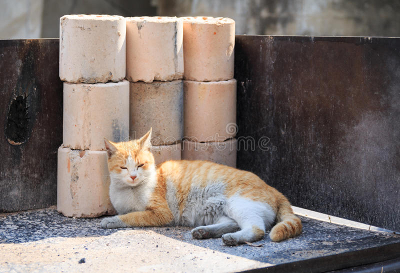 alley cat in shantytown stock images