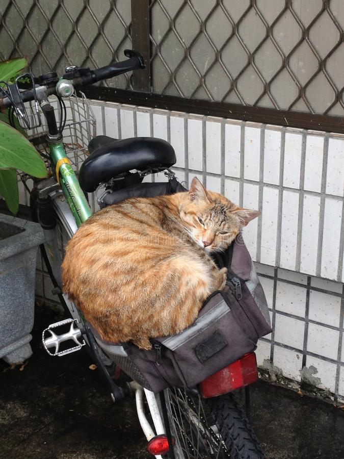 Alley cat. An alley cat sleeping on the backseat of a bicycle stock photos