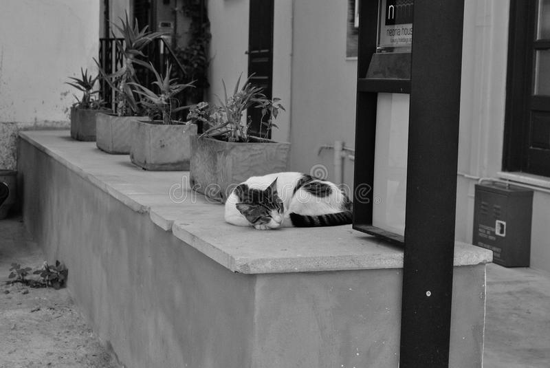 Alley Cat. Sleeping on a ledge in downtown Chania, on the isle of Crete, Greece royalty free stock image