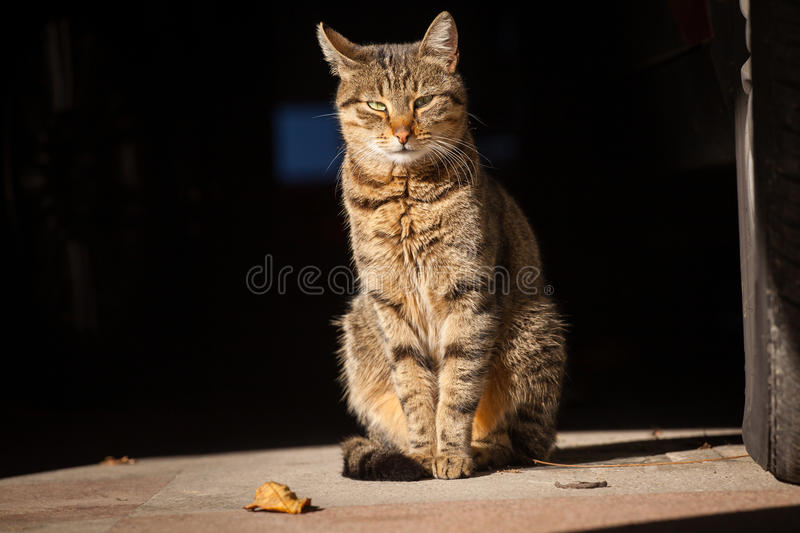 Alley cat in the sun. Alley cat enjoys the autumn morning sun royalty free stock photography