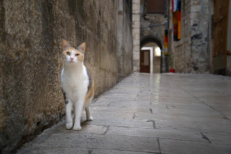 Alley cat walking in the narrow street of old town stock photography