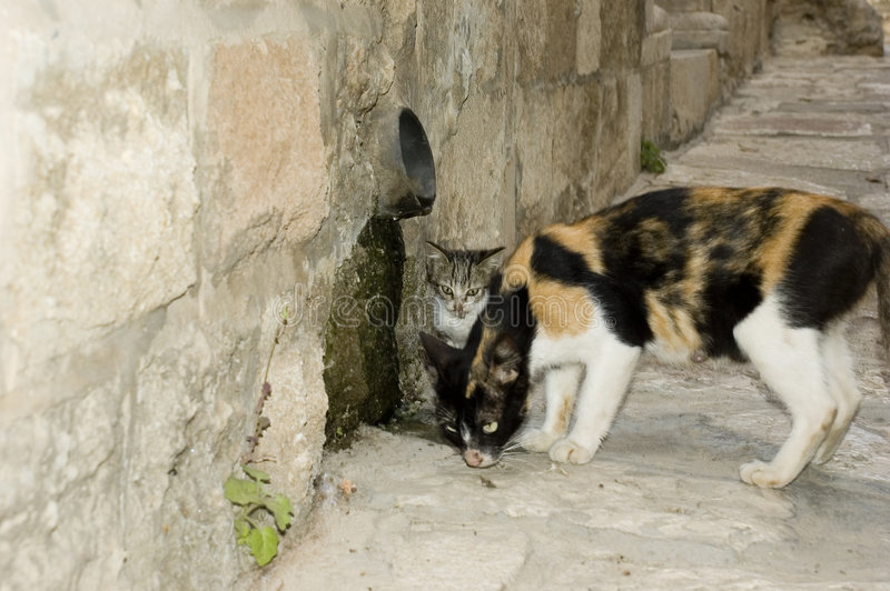 Alley Cats. A pair of cats in a stone alley way royalty free stock images