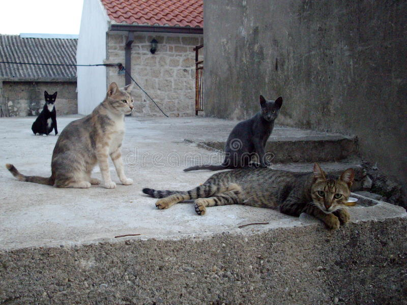 Alley cats in Croatia. Stray cats in a small town in Croatia royalty free stock images