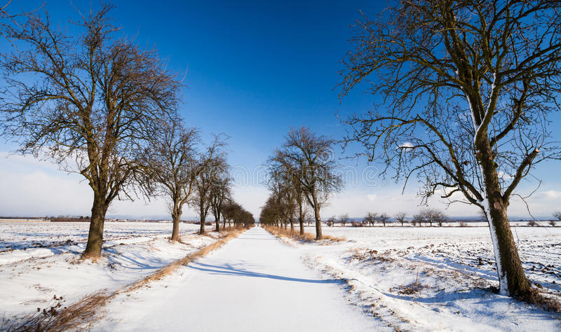 Alley covered with fresh snow royalty free stock photography