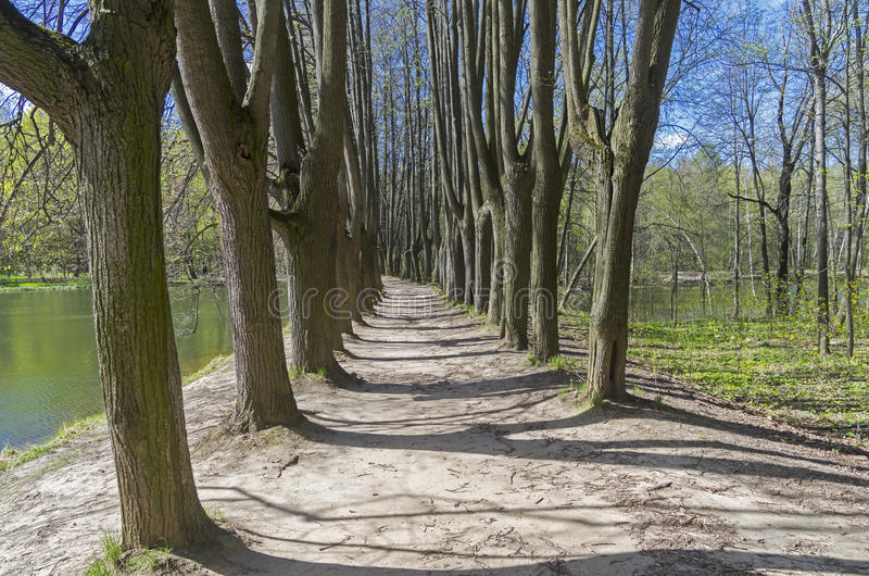 Alley on the dam separating the two ponds. Sunny day in early May. Forest park Uzkoe, Moscow, Russia stock photos