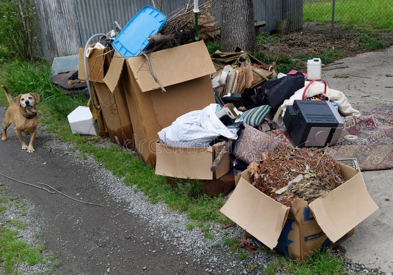 Alley Debris with Curious Loose Dog stock photo