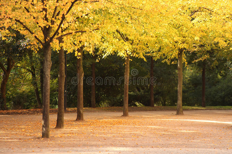Download Alley In Fall Covered With Leaves Stock Image - Image: 11726753