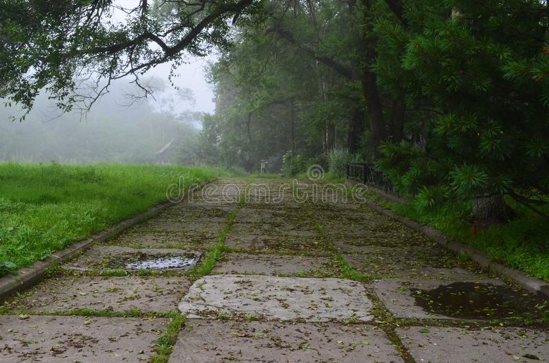 Alley in the fog. Old slab paths in the alley. Fog hides the continuation of the path. the old road plates overgrown with grass royalty free stock photo