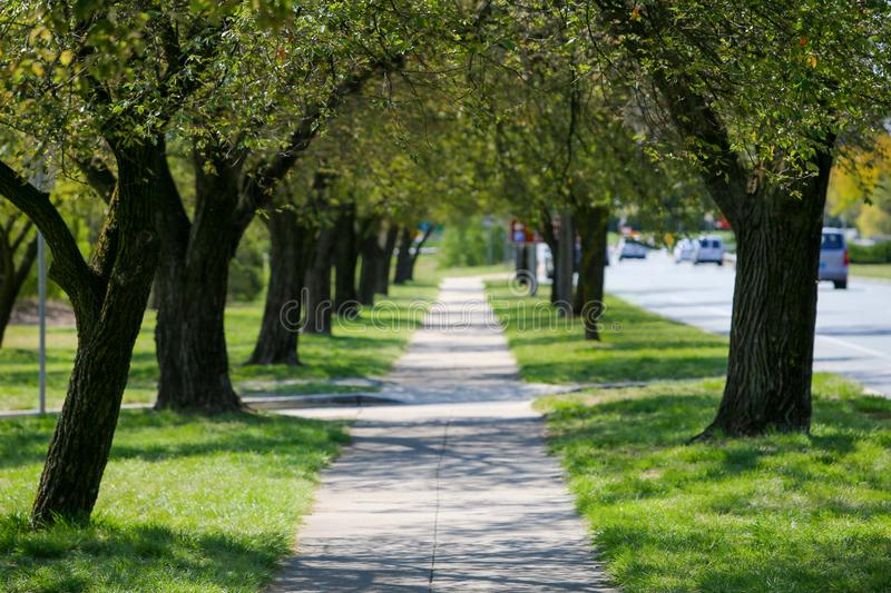 Alley of green trees in city, street and cars stock photography