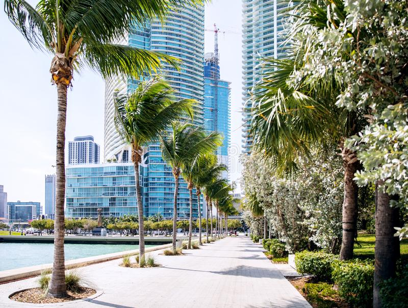 Alley with palm trees overlooking the city skyscrapers stock images