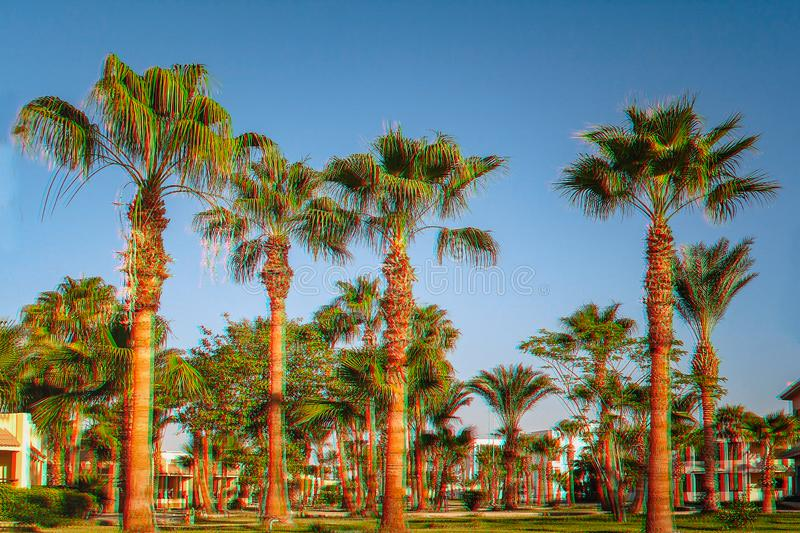 Alley with palm trees on a tropical resort in Egypt Glitch Effect. Alley with palm trees on a tropical resort in Egypt. Glitch Effect royalty free stock image