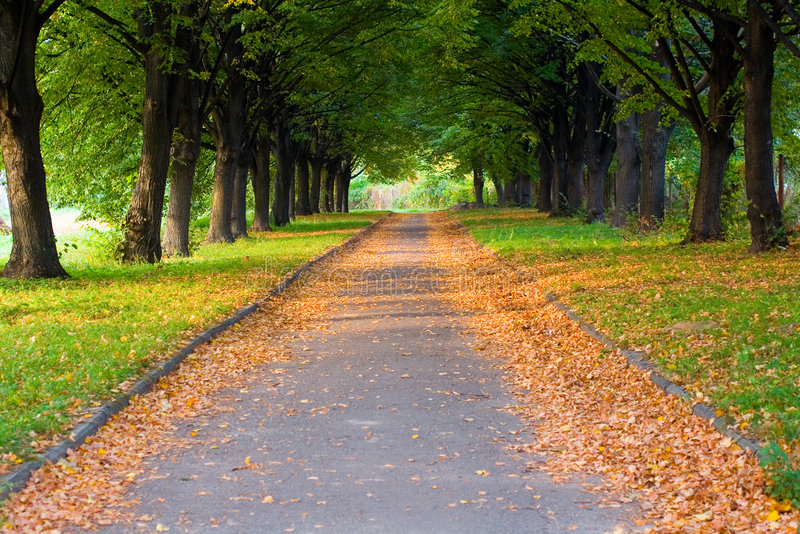 Alley in the park royalty free stock image