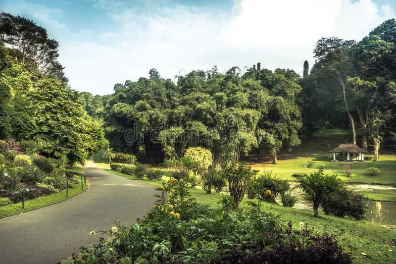 Alley in park garden with landscape design in Royal Garden Peradeniya in Sri Lanka nearby Kandy. Surroundings royalty free stock photo